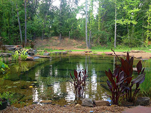 Natural Swimming Ponds | FncPonds
