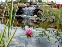 koi pond watergarden with waterfall