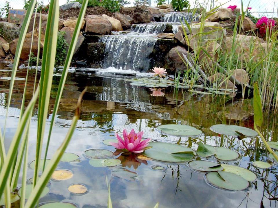 Koi Ponds, Watergardens and Ecosystem Ponds | FncPonds