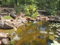 koi pond watergarden backyard