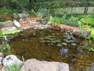 koi pond watergarden backyard