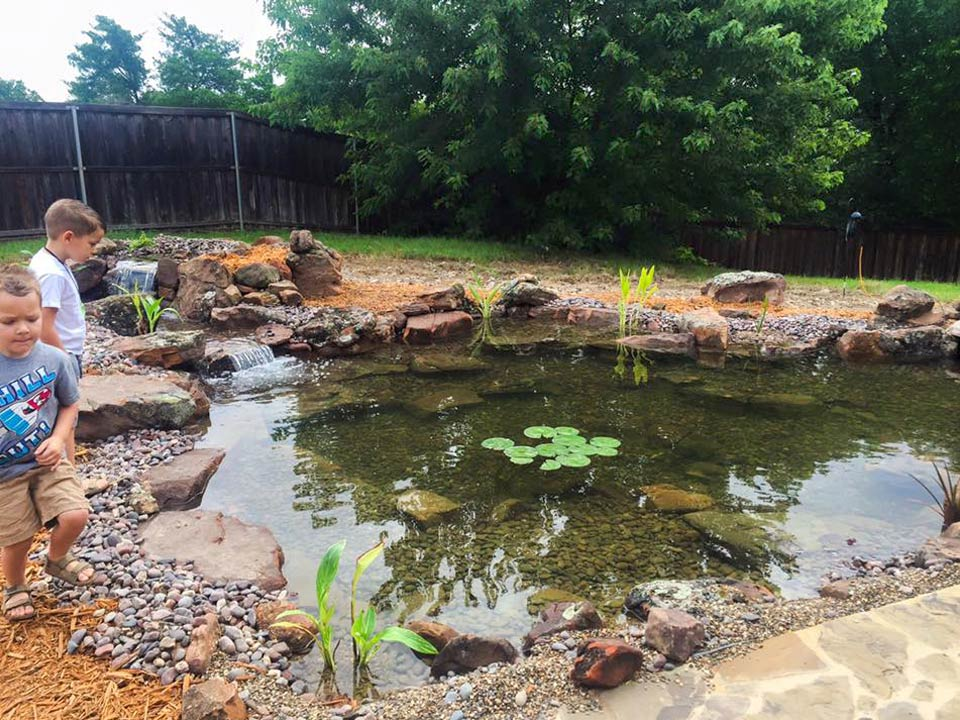koi pond watergarden kids