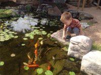 koi pond watergarden backyard kids