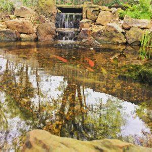 Dallas Fish Pond