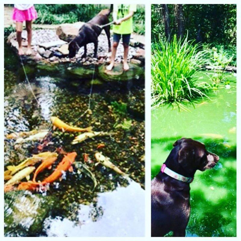 Dallas pond renovation