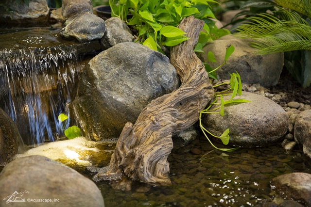 Dallas pond driftwood